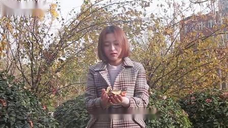 95版影视《楚留香传奇》片头曲《天大地大》郑少秋献唱,满满回忆