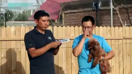 怎么训练狗狗 如何训练狗狗 狗狗多大开始训练