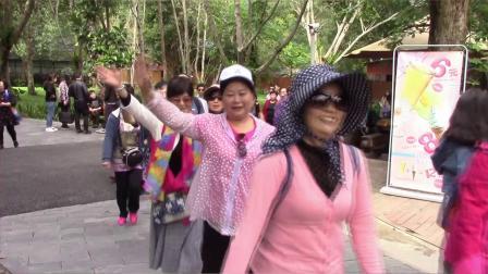 威远友友西双版纳旅游视频《西双版纳野象谷》