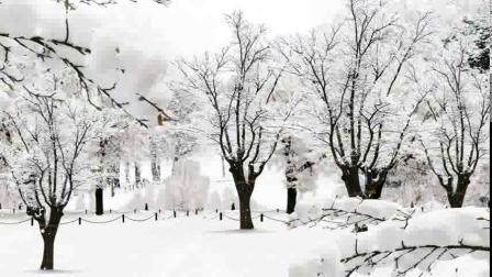 2136652_唯美大气下雪视频素材