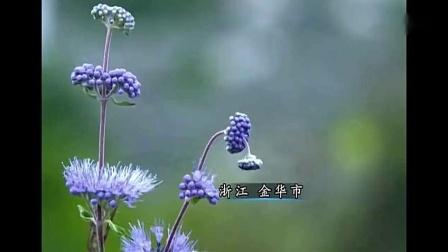 舌尖上的中国:金华火腿,肌红脂白,香气浓郁,滋味鲜美!