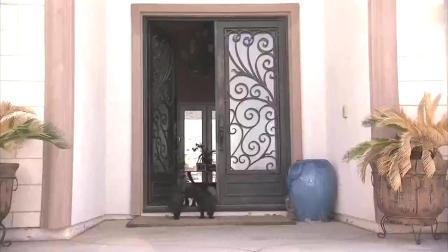 狗妈妈教狗宝宝守卫方法,这只小奶狗却守着甲