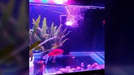 看看我家养的鱼🐠