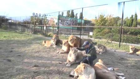 真正的牛人是怎样的?把狮子养成狗一样,不听