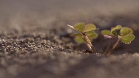 糖果屋历险记-蚂蚁的小知识