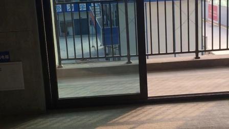电梯入户两梯两户南北通透的洋房