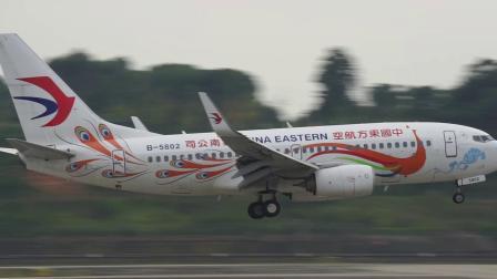 中国东方航空云南公司 孔雀彩绘 波音737 B-5802 成都双流机场 二跑道降落 蒋蕴龙