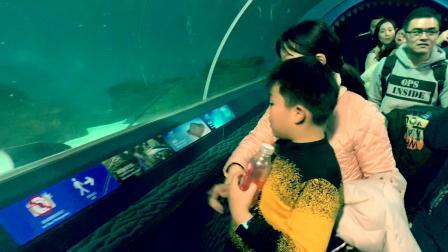 上海海洋水族馆 2019.1.19