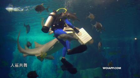海洋馆 - 人鲨共舞