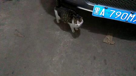 电厂流浪猫被酒库收留