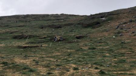 企鹅岛19-快结束的时候下起了雨