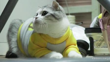 【泡芙的日常】面带微笑,眼神清澈的小猫咪,内心一定也很善良吧 - 微信图片_20180812181140_9