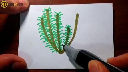 这是一株迷迭香,这种植物是制作香水的重要材料
