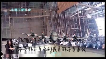 东莞信鸽协会桥头站种鸽