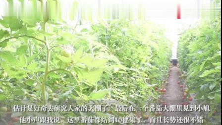 为啥寿光是全国蔬菜种植的代表,看完你就明白,蔬菜基地不是吹的