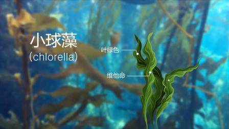 德玛贝尔海藻凝胶软膜