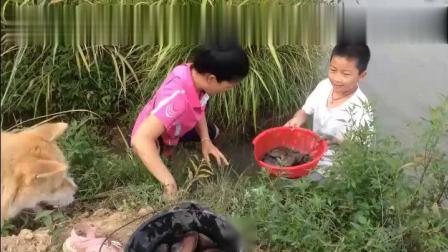 舒畅带着孩子们下池塘摸田螺,欢声笑语中意外看到鱼跃池塘?#28909;?#20107;