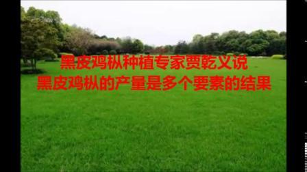 黑皮鸡枞专家贾乾义说;黑皮鸡枞的产量是多个要素的结果