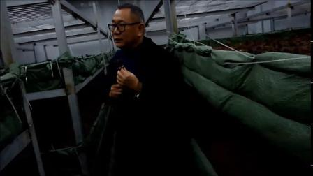 我国黑皮鸡枞种植专家贾乾义谈黑皮鸡枞产业