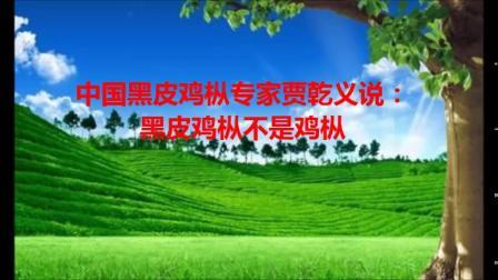 中国黑皮鸡枞专家贾乾义说:黑皮鸡枞不是鸡枞