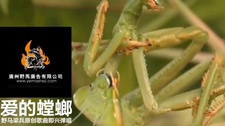 爱的螳螂2