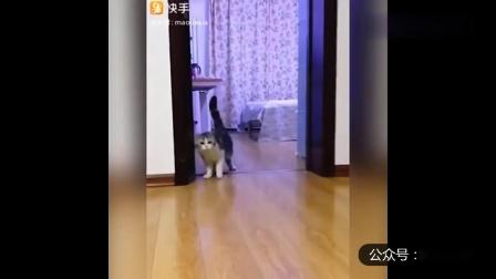 幽默搞笑猫咪视频第两千零二十九期
