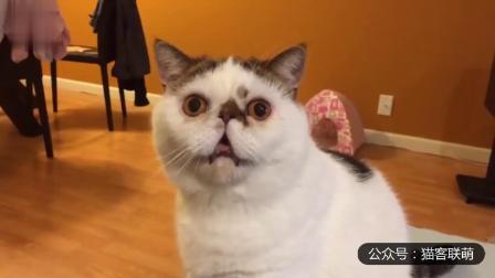 幽默搞笑猫咪视频第两千零三十四期