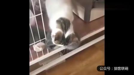 幽默搞笑猫咪视频第两千零三十五期