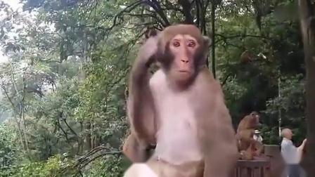 贵阳黔灵山公园(人猴共处)