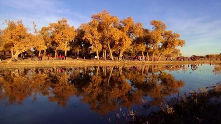 我们穿越500公里无人区去额济纳胡杨林,一路的精彩分享给你!