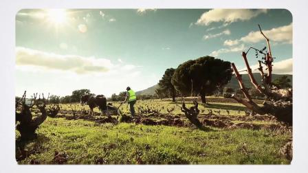 Wines from Spain西班牙美酒官方推广视频_中文字幕