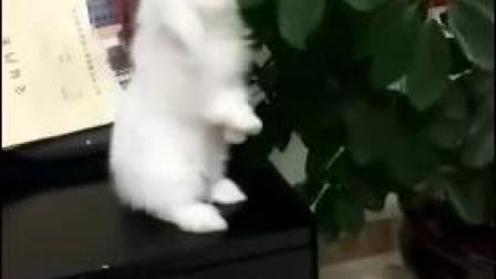 吃叶子的小兔兔