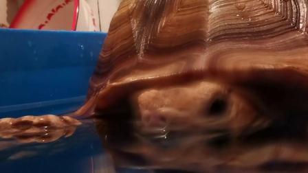 苏卡达泡澡的神秘凝视
