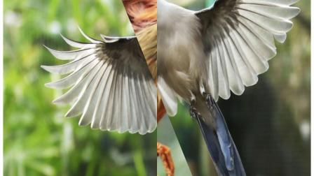 干姿百态的鸟类世界
