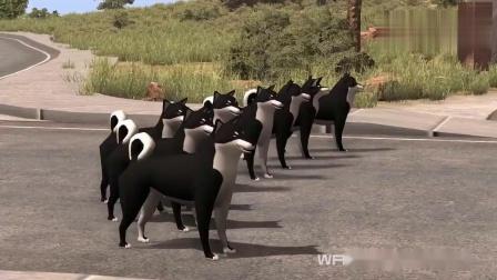 BeamNG:搞笑玩法,当一群狗遇见皮卡车会发生什么,画面好酸爽啊