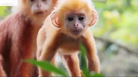 19个最奇怪的婴儿动物图片