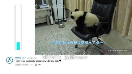 国外网友看办公室里的熊猫评论:中国人通常骑他们的熊猫上班...-_超清