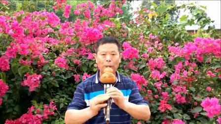 金湖葫芦丝演奏《花儿香》
