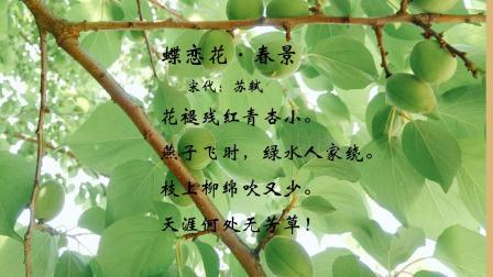 古诗词欣赏  苏轼 蝶恋花(春景)词中名句:天涯何处无芳草朗读 欣卓