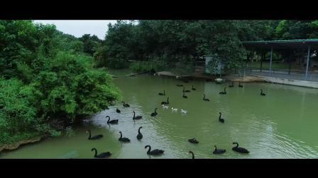 东莞香市动物园 实拍+航拍精剪