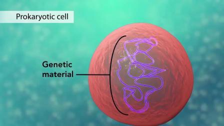医学动画模拟 细胞模拟.mp4