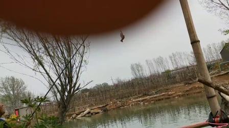 临朐钓鱼帮2019年3月28日夏大师钓鱼钓着家衬子