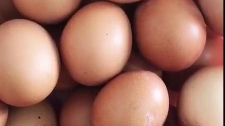 吐司面包片两片 一碗豆浆 一个鸡蛋