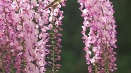 花卉欣赏:五光十色(图片合成)