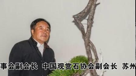 聚焦两会盆景奇石艺术家朱德保艺术欣赏