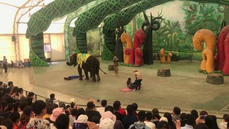 常州恐龙乐园之大象按摩20190504