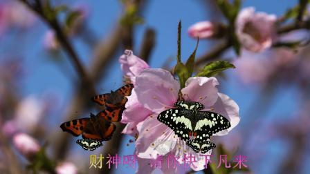 天津大道的【 桃花开了】