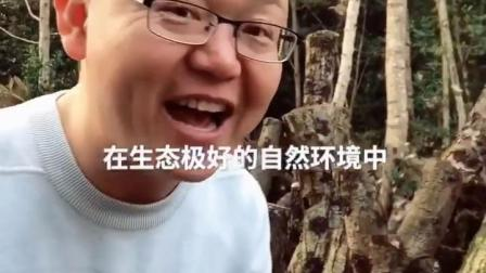 #有料先生带你看美好中国 看过很多风景后,今天换个口味,带你看看香菇是怎么长出来的!