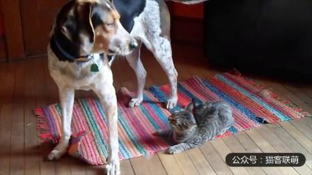幽默搞笑猫咪视频第两千零三十七期