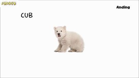 婴儿动物图片播放
